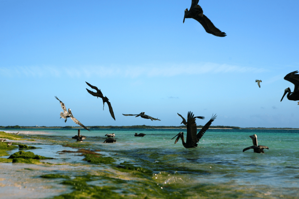 los roques praias do caribe